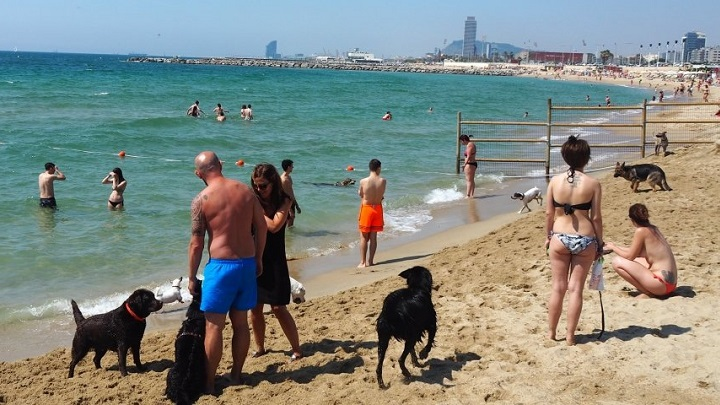 playa-perros-barcelona1