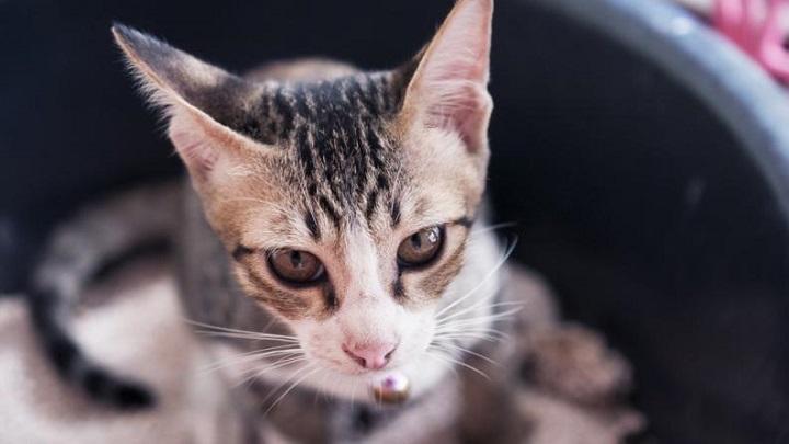 arena-gato