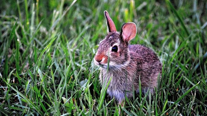 Conejo-esperanza-de-vida0