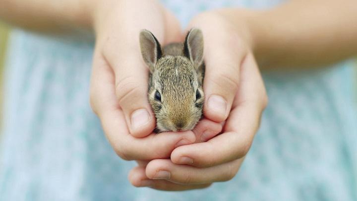 Conejo-esperanza-de-vida2