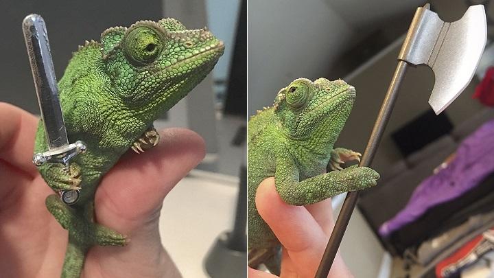 fotos-camaleon