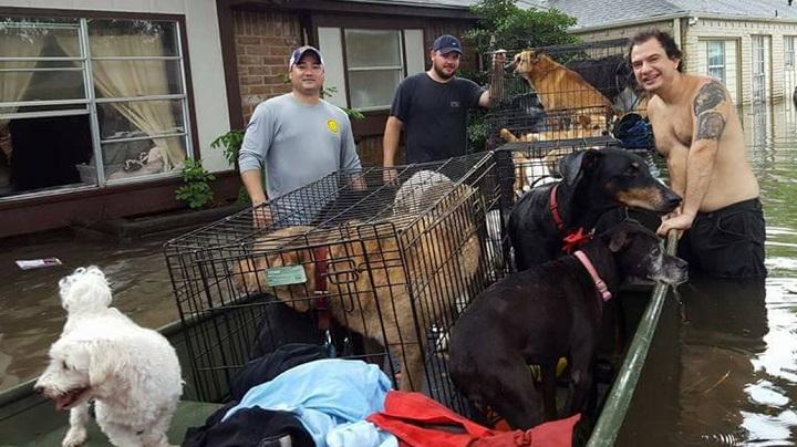 rescate-perros