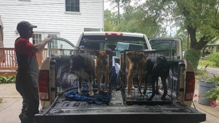 rescate-perros1