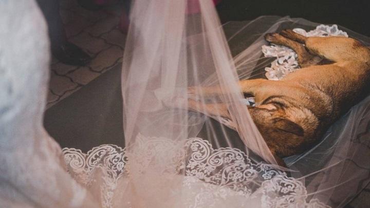 El-perro-que-interrumpio-la-boda-foto0