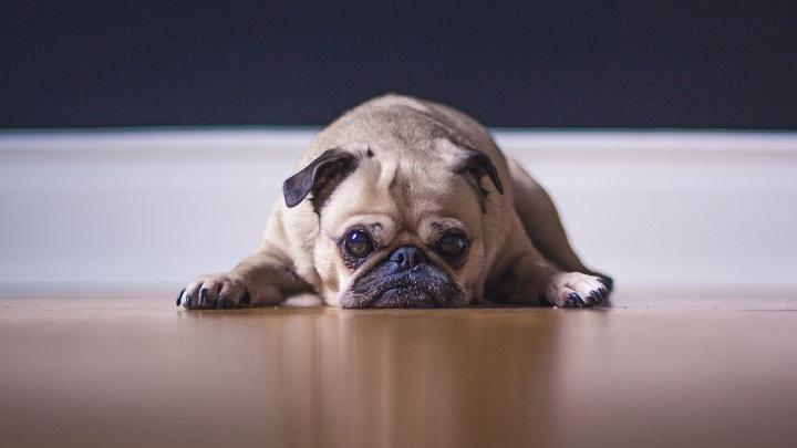 aburrimento-perros