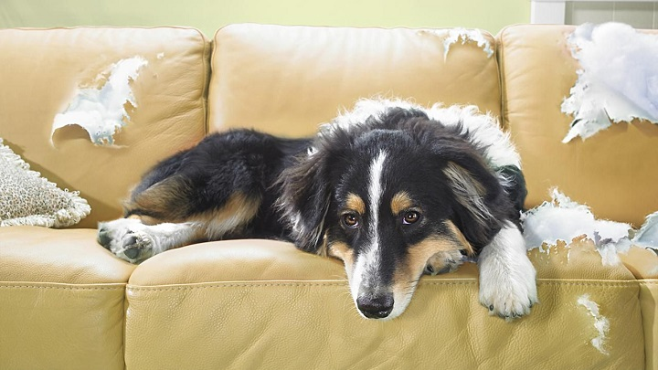 aburrimento-perros1