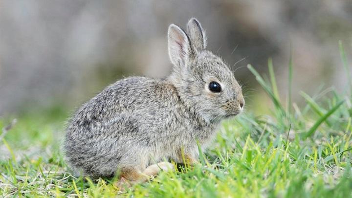 pelo-conejos