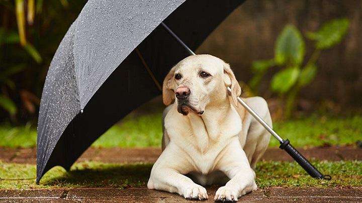 perro-tormenta