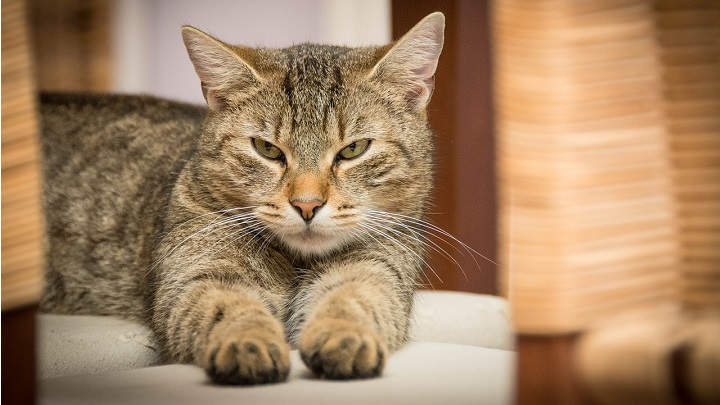 Gato-arenero