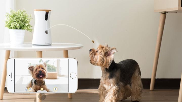 gadgets-mascotas