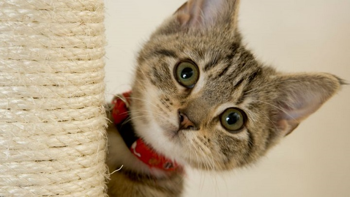 gato-sofa1