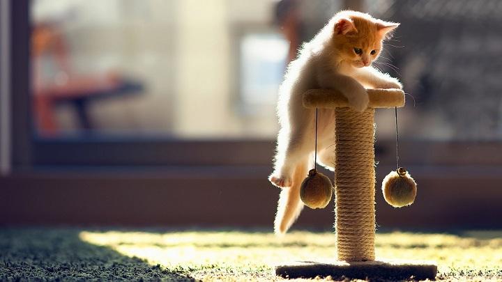 juego-gatos1