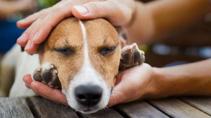 perros-envenenados