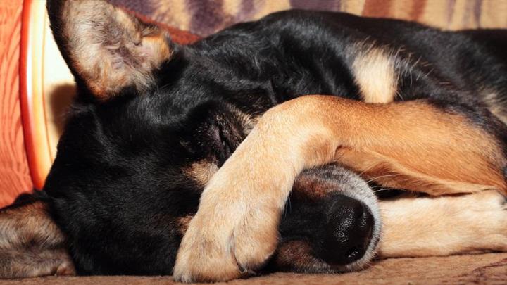 perros-petardos