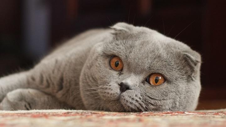 gato-bonito