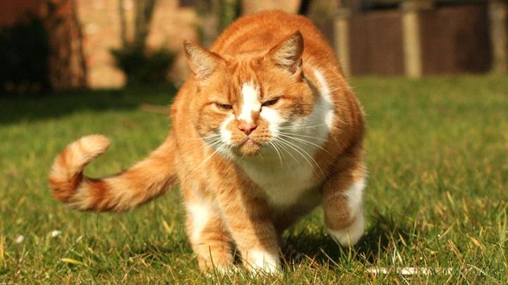gatos-nerviosos