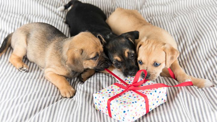 regalos-perros