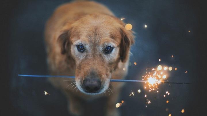 perro-fuegos-artificiales