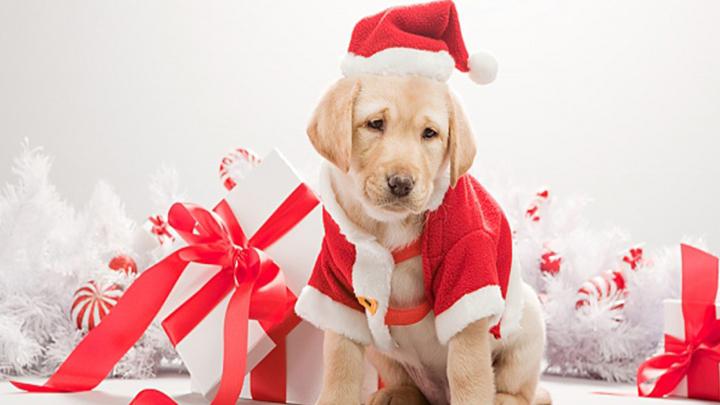 estres-perros-navidad