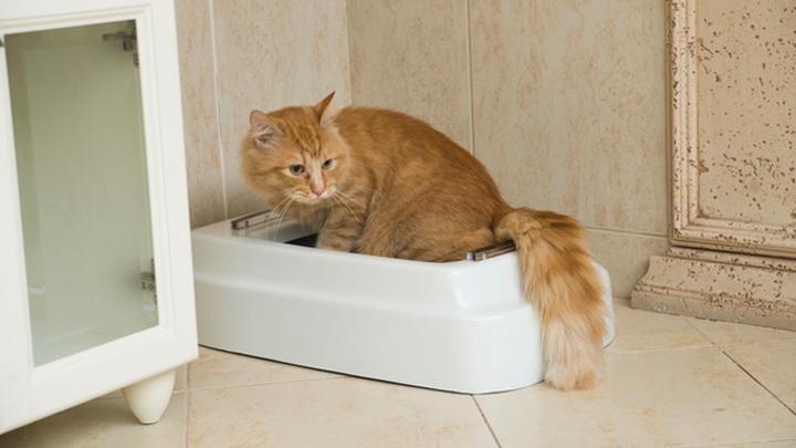 areneros-gatos