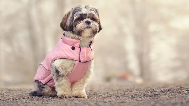 consejos-mascotas-invierno