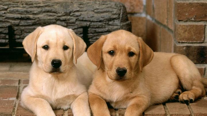 gastos-perros