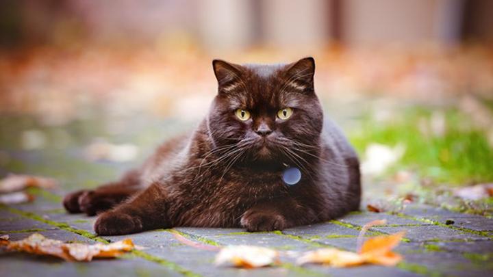 gatos-garrapatas