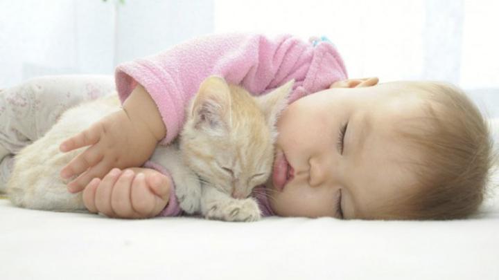 gatos-ninos