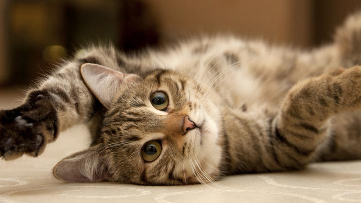 gatos-bolas-pelo