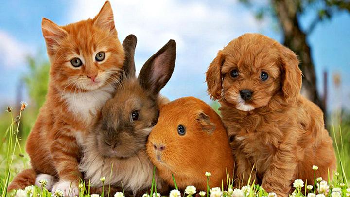 nombres-mascotas