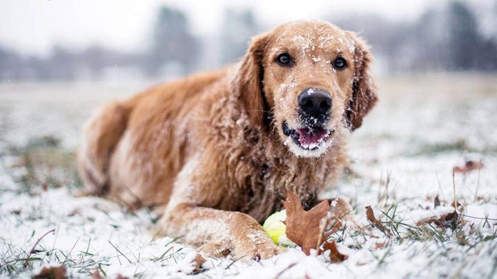 frio-perro