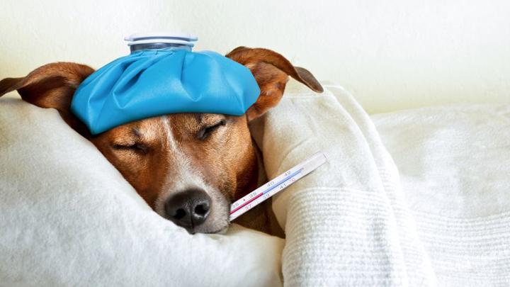 cuidados-perros-resfriados