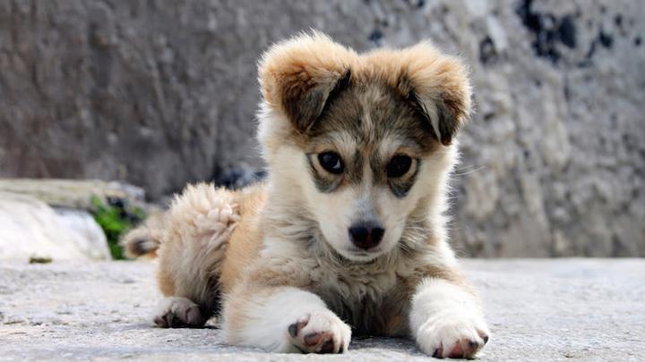 edad-perros