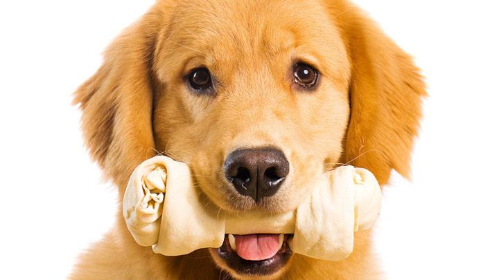perros-enfermedad-encias