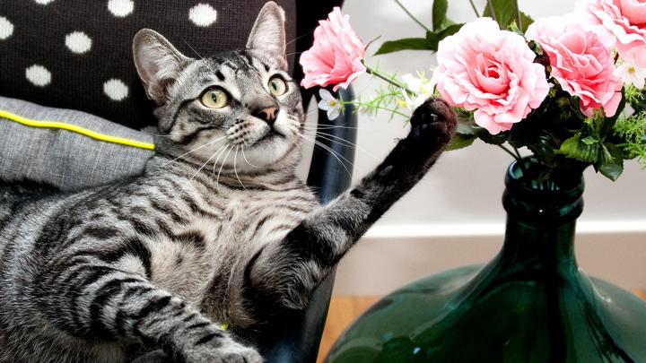 gatos-ambientadores