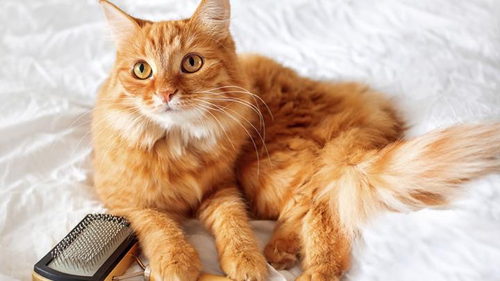 gatos-cepillado