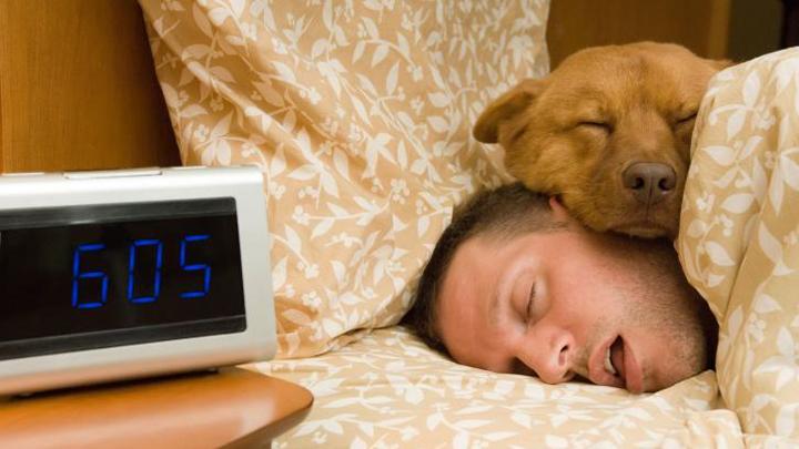 perros-dormir