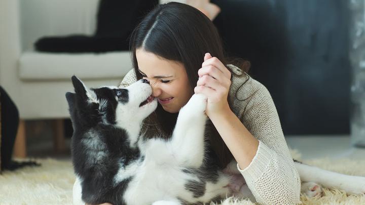 perros-besos