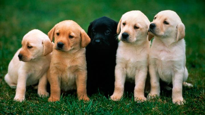 perros-derechos