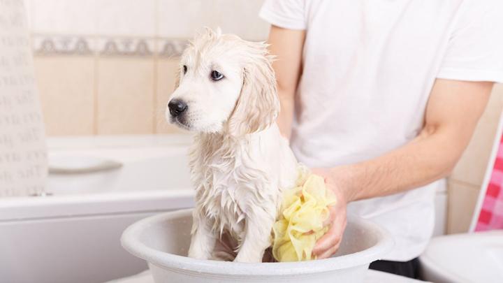 bano-perros