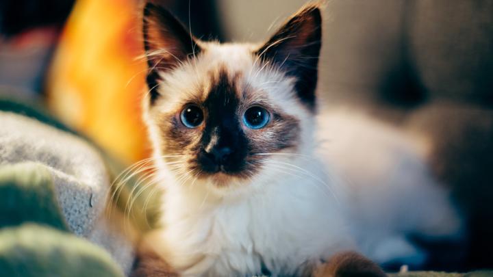 gatos-hogar