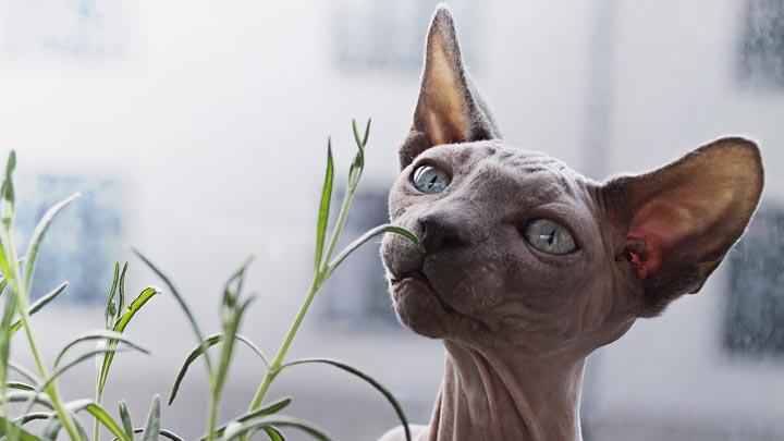 gatos-raros