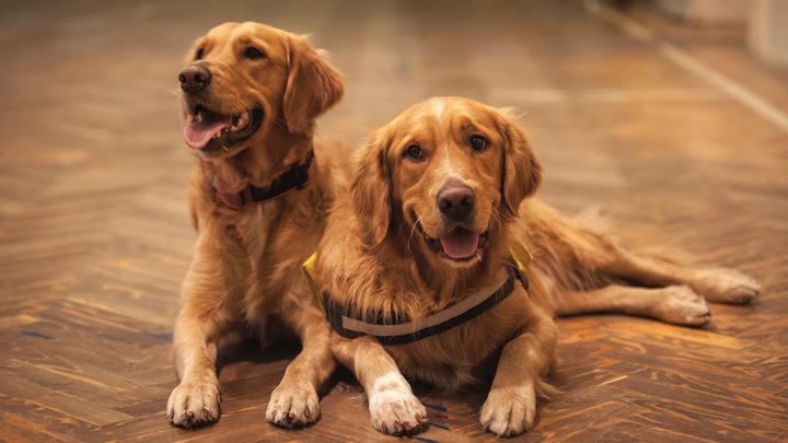 perros-hogar