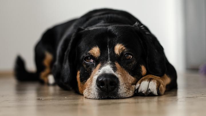 tabaco-perros