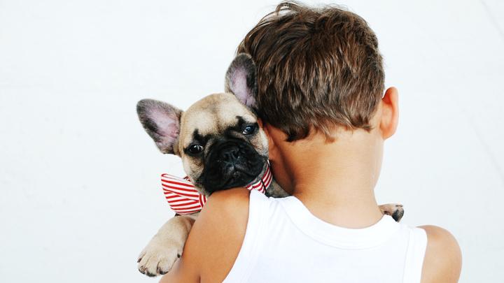 perros-carinosos