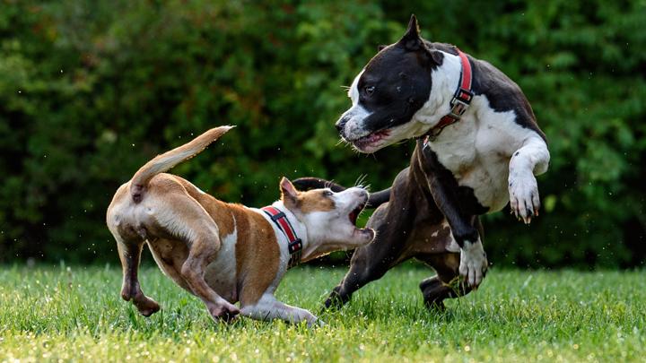 perros-mordedores