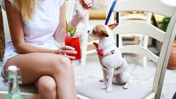perros-veganos