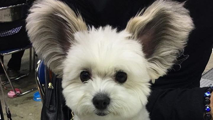 perro-orejas