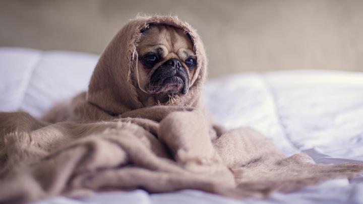 perros-adopcion