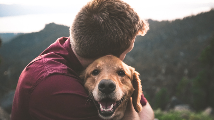 mascotas-impacto